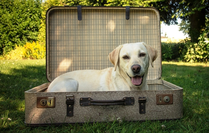 Bringing your pet to Spain